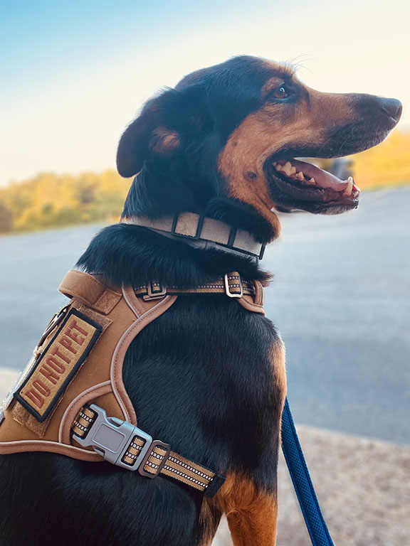 Morale-Boosting Patches.  DO NOT PET Velcro Brand patch on dog's harness.